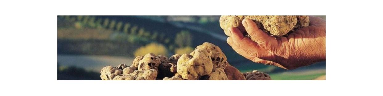 Funghi e tartufi abbinamento con il vino giusto